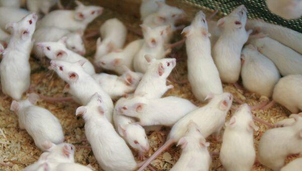 Lab mice - Sputnik Italia