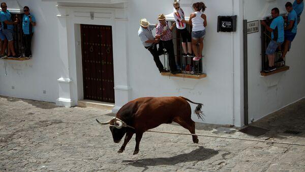 Toro in azione - Sputnik Italia