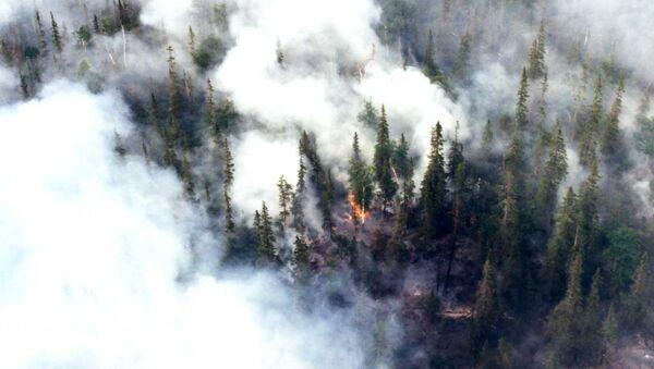 Incendio boschivo in Siberia - Sputnik Italia