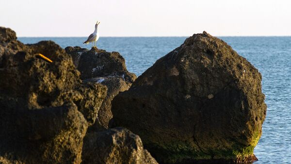 A sea gull on the coast of the Sea of Azov in the vicinity of the resort Kurortnoye - Sputnik Italia