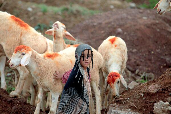 Una ragazza sta vicino alle pecore che vengono vendute per le celebrazioni del Kurban Bayram ad Islamabad, Pakistan. - Sputnik Italia