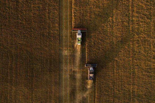 La raccolta dell'avena nella regione di Novosibirsk, Russia. - Sputnik Italia