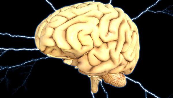 Cervello umano - Sputnik Italia
