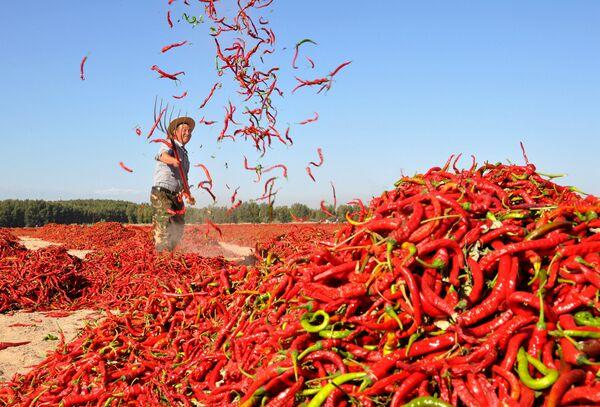Un uomo fa seccare il pepe rosso nel vilaggio cinese di Zhangye. - Sputnik Italia
