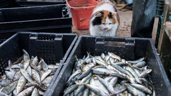 Корзины с рыбой во время прибрежного лова черноморской рыбы в Севастополе - Sputnik Italia