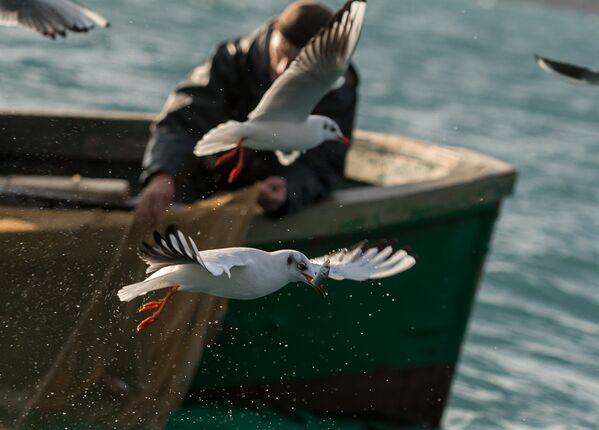 Un pescatore visto durante la pesca nel Mar Nero a Sebastopoli. - Sputnik Italia