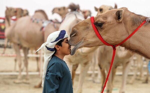Scambio di tenerezze fra questo bambino ed un cammello. - Sputnik Italia
