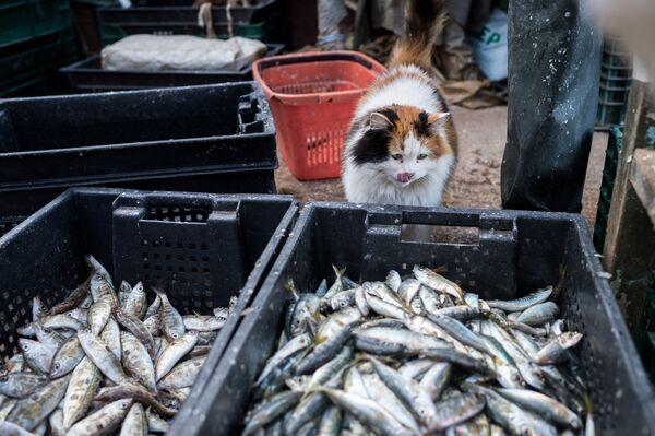 Cesti di pesci visti durante la pesca nel Mar Nero a Sebastopoli. - Sputnik Italia