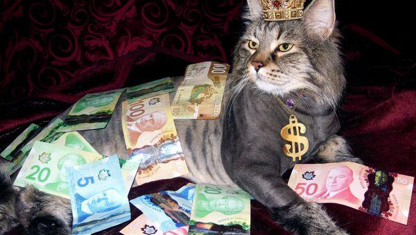 Il gatto ricco - Sputnik Italia