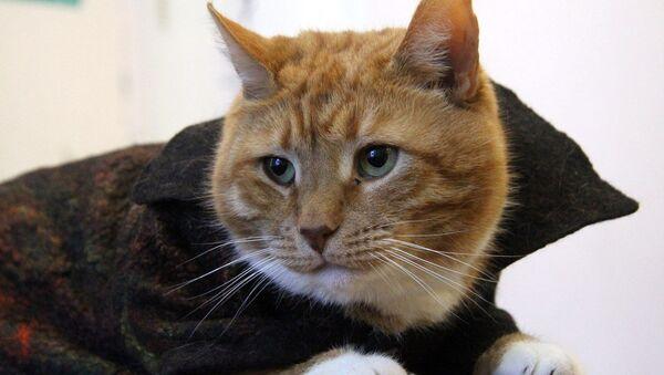 Il gatto Filemon - Sputnik Italia