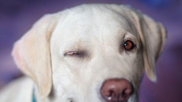 Un perro - Sputnik Italia