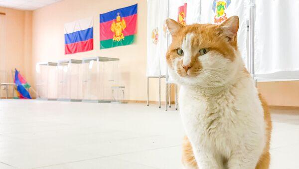 Il gatto ufficiale del Ponte della Crimea - Sputnik Italia