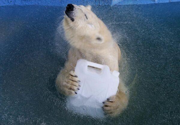 Un orso bianco Avrora nello zoo di Krasnoyarsk, Russia. - Sputnik Italia