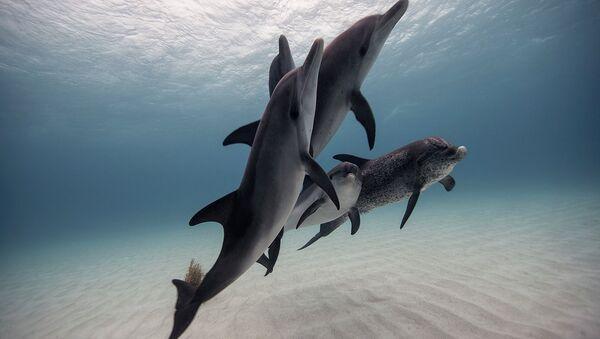 Underwater Photography - Sputnik Italia