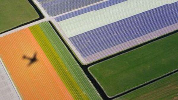 Campi di fiori in Olanda - Sputnik Italia