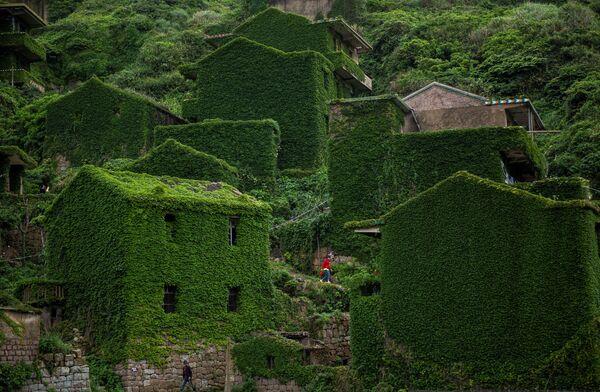 L' isola cinese dove la natura si è ripresa tutto quello che era suo - Sputnik Italia