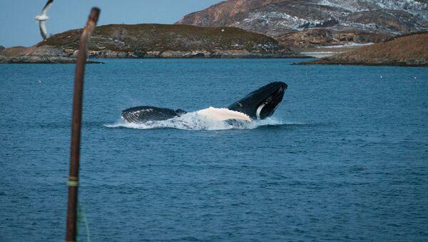 Whale - Sputnik Italia