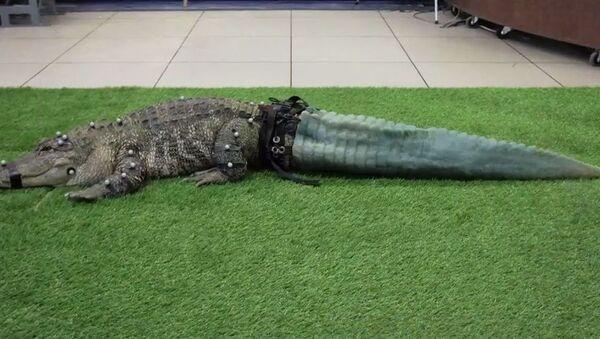 All'alligatore hanno stampato la coda con una stampante 3D - Sputnik Italia