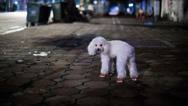 Hanoi - Sputnik Italia