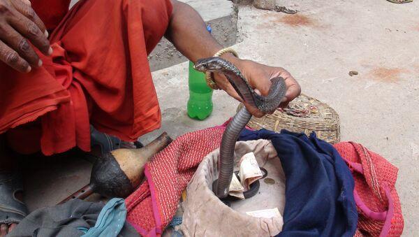 Snake charmer 'Sapera Baba' handling a cobra - Sputnik Italia