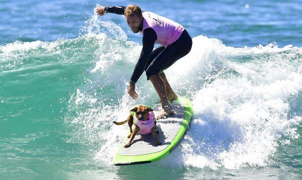 La gara annuale dei cani surfer Surf City Surf Dog, California. - Sputnik Italia