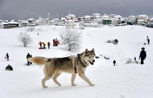 Un cane alla montagna Ai-Petri. - Sputnik Italia