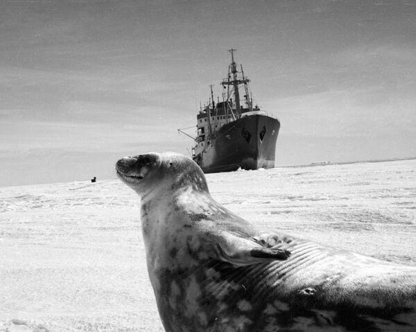 Antartide, la scoperta continua - Sputnik Italia