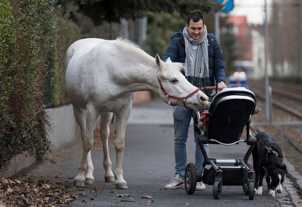 Il cavallo chiamato Jenny osserva un bambino in passeggino, Francoforte sul Meno, Germania. - Sputnik Italia