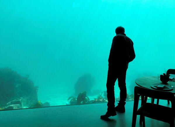 Dopo aver mangiato, al ristorante sottomarino Under, si può ammirare la vita sottomarina - Sputnik Italia