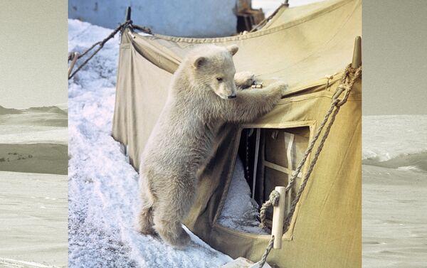 Giovane orso troppo curioso - Sputnik Italia