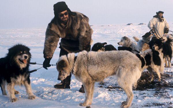 Cani da slitta e guardiani del parco (1970) - Sputnik Italia