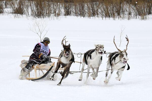 Giù al nord russo si fa festa: è il giorno della renna! - Sputnik Italia