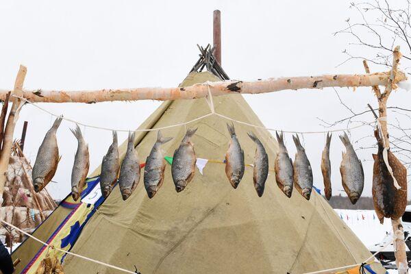 Pesce essicato in un accampamento che rievoca i costumi tradizionali dei popoli nomadi della tundra siberiana - Sputnik Italia