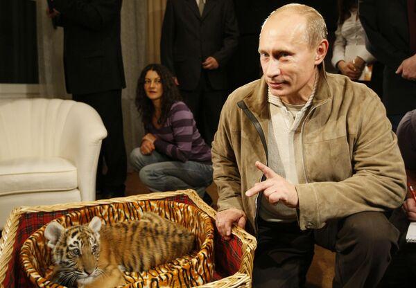 9 ottobre 2008, per il suo 56° compleanno Vladimir Putin riceve in regalo un cucciolo di tigre siberiana - Sputnik Italia