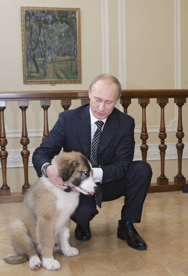 9 dicembre 2010, l'allora primo ministro russo Vladimir Putin nella sua residenza di Novo-Ogarevo con il suo cane Buffy - Sputnik Italia