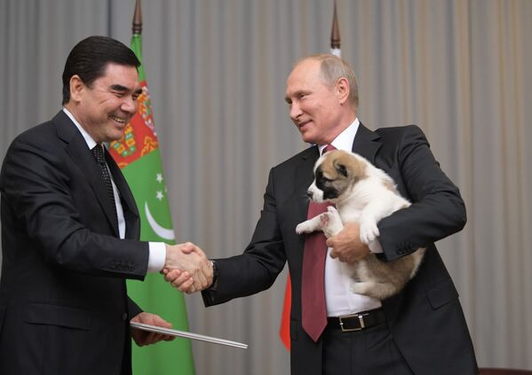 11 ottobre 2017, il presidente russo Putin stringe la mano al presidente del Turkmenistan Gurbanguly Berdymukhamedov e regge nel braccio sinistro il cucciolo di pastore dell'Asia Centrale ricevuto come regalo di compleannno durante la visita nella capitale turkmena Ashgabat - Sputnik Italia