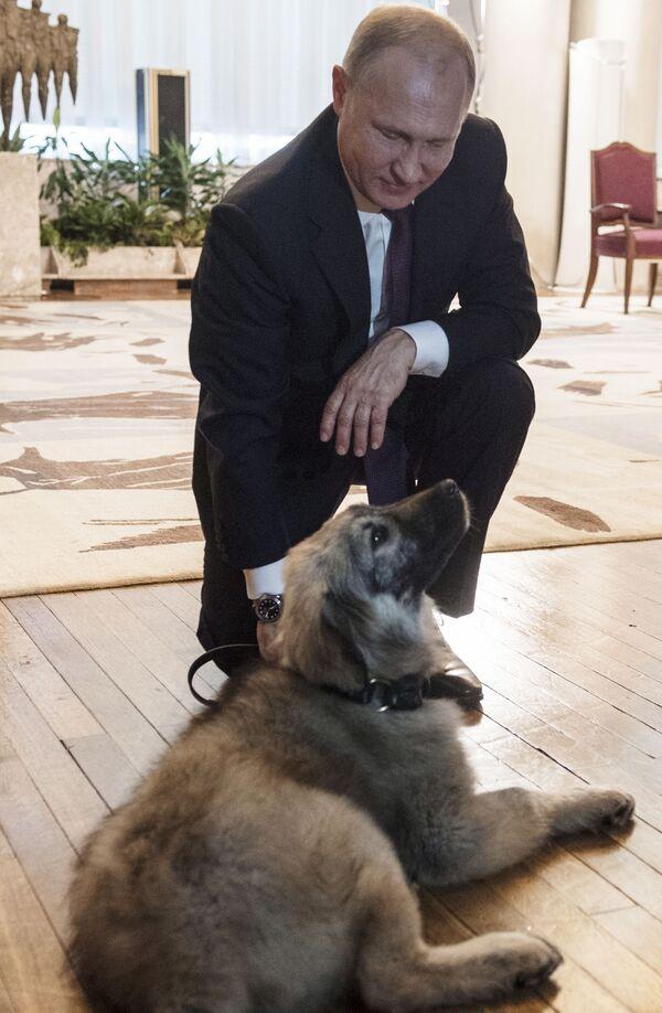 17 gennaio 2019, Putin insieme al cucciolo di pastore di Ciarplanina donatogli dal presidente serbo Aleksandr Vucic - Sputnik Italia