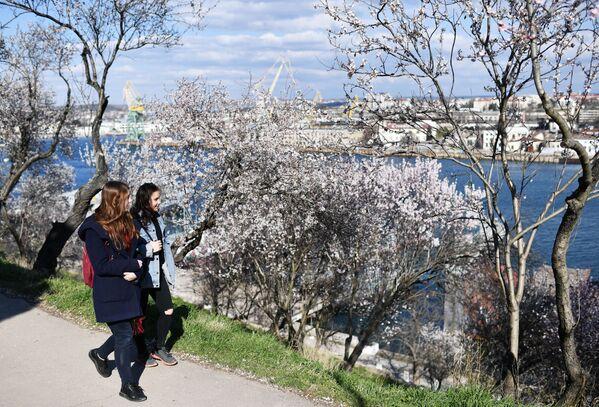 La primavera nella Crimea. - Sputnik Italia