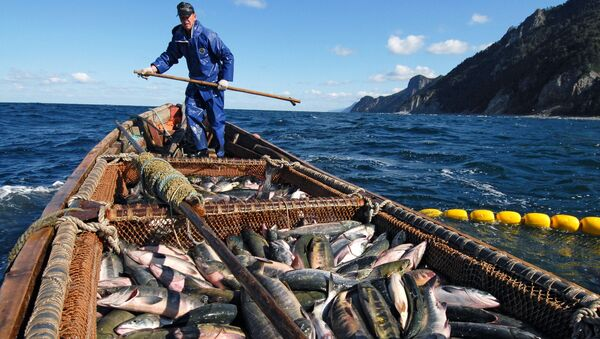 Pesca ricca all'isola Kunashir - Sputnik Italia