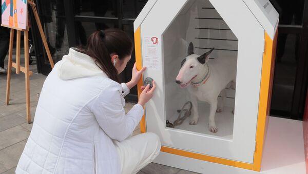 Il primo parcheggio per cani in Russia - Sputnik Italia