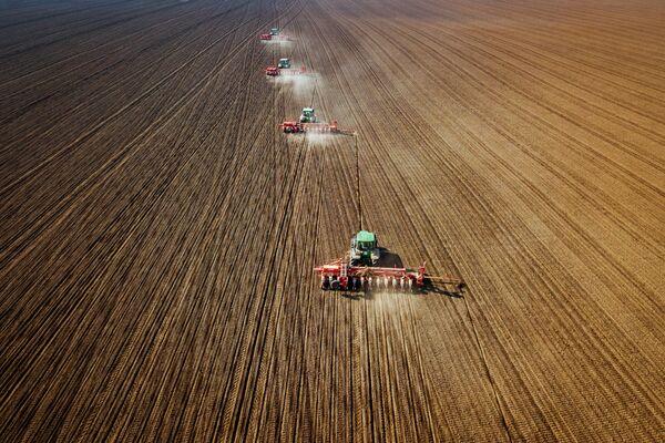 La semina del girasole nel territorio di Krasnodar. - Sputnik Italia