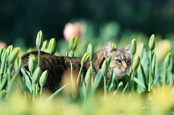 Un gatto-residente del giardino botanico in Crimea. - Sputnik Italia