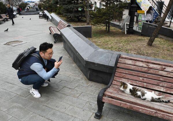 Una turista fotografa una gatta a Vladivostok, Russia. - Sputnik Italia