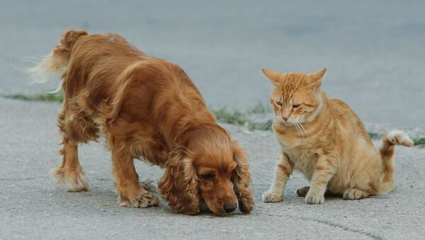 Cane e gatto - Sputnik Italia