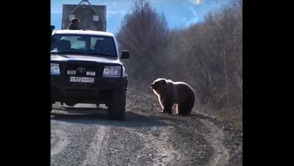 Libertà in cambio di focacce: catturato orso ladro di cibo in Kamchatka - Sputnik Italia