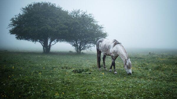 Un cavallo pascola in un prato nella regione di Adighezia, Russia. - Sputnik Italia