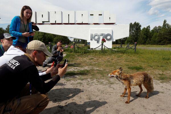 La gente scatta foto del volpe nella città abbandonata Pripyat, vicino alla Centrale nucleare di Chernobyl. - Sputnik Italia