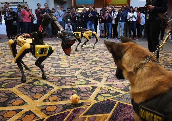Il cane K9 con il cane-robot Spot alla conferenza Amazon Re:MARS. - Sputnik Italia