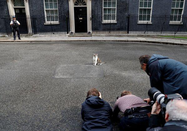 Gatto Larry fotografato dai media davanti alla sede dei premier brittanici in Downing Street a Londra. - Sputnik Italia
