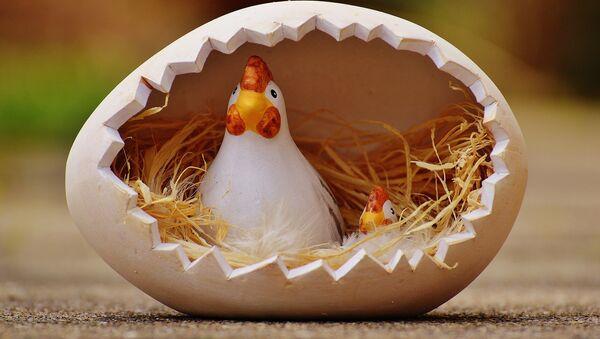 Una gallina giocattolo - Sputnik Italia